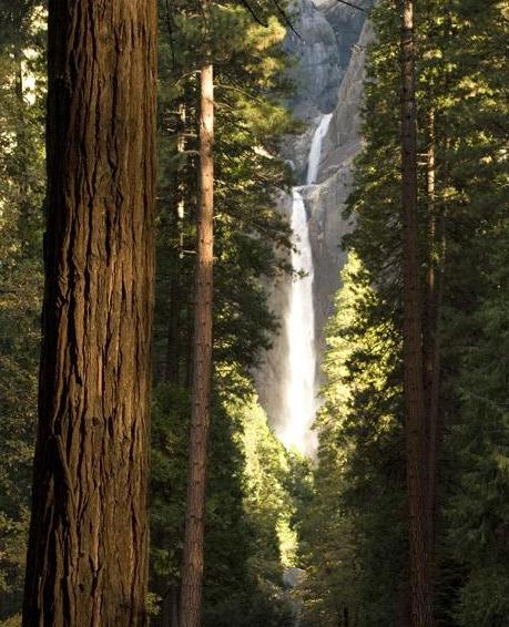 Sequoia&falls