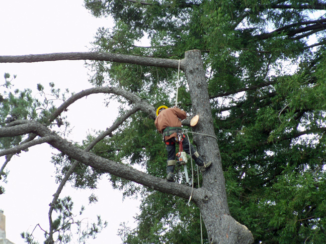 Treemancloseup