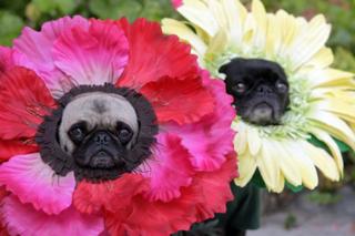 Flowerdogs