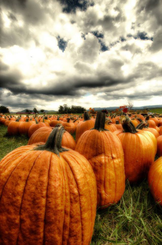 Pumpkiin field