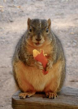 5154601547_squirrel_1_xlarge